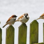 No Bird torture: aggiornamenti…non ci sono parole!